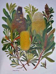 Banksia Collection $100
