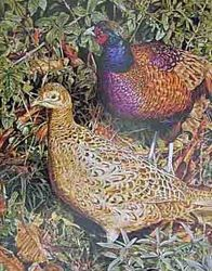 Pheasants $25