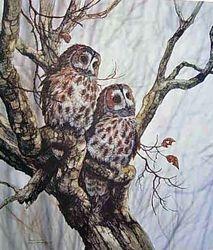 Tawny Owls $90