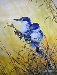 Forest Kingfishers $60
