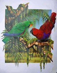 Eclectus Parrots $75