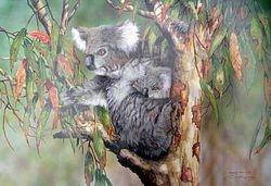 Koala & Cub $60