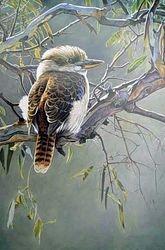 Kookaburra $60