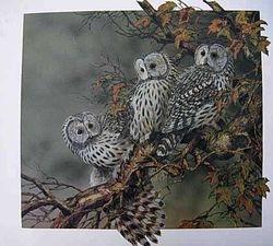 Ural Owls $100