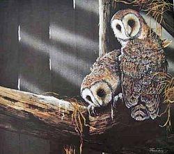 Barn Owls $50