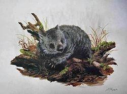 Wombat $70