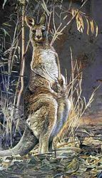 Grey Kangaroo $90