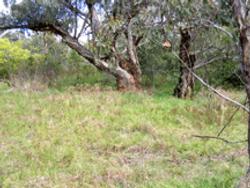 2012 trees near the Mess