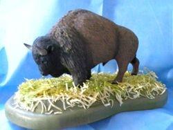 American Bison  / Buffalo