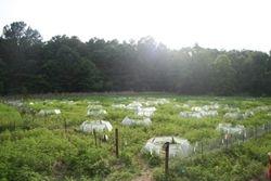 Herd of greenhouses