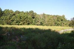 The field - peak biomass