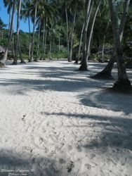Palms and white sand