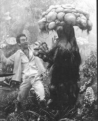 """""""Matango,"""" 1963."""