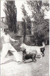 Bela Love His Dogs