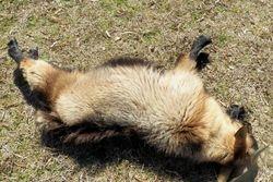 Peanut fainting