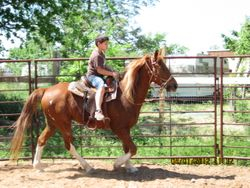 Kids can ride save in a Roundpen