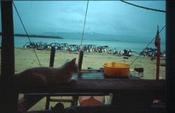 on the dry  Tadri, Mauzi on the look out. KA / India  1984