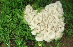 Fungus Colony