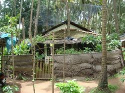 Living under Coconut palms