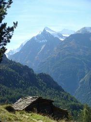 Swiss Alpine