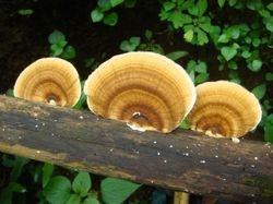 Fungus on broken tree branch