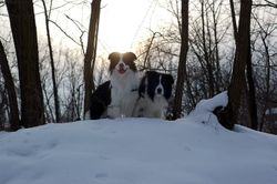 2011 winter