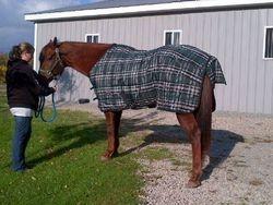 Grand Champion Horse