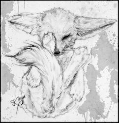15min fennec fox