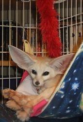 Akiko in her hammock