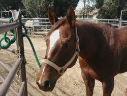 APHA MARE