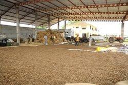 Drying cashew nut