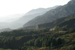 Angeles Crest Forest
