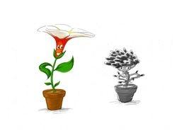 Potted Flower Frangipani