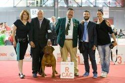 WORLD DOG SHOW 2015 - MILANO 12/06/2015