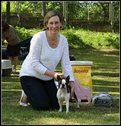 Boston Terrier BIS 3