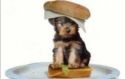 Dogwich