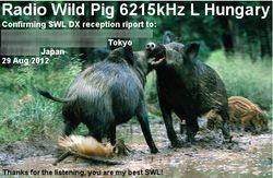 Wild Pig Radio