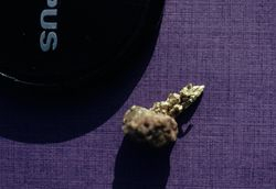 Gold Nugget on rounded rock, Snow Gulch, Alaska