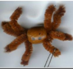 Brown Recluse or Fiddleback Spider