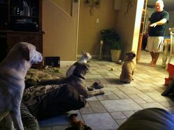 my dad n our dogs