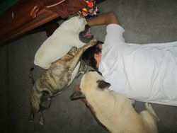 too many dogs!
