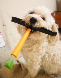 Puppy Picasso!