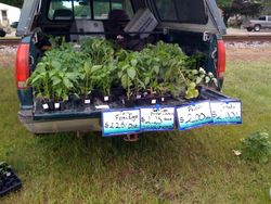 Chuck's truck of plants and eggs.