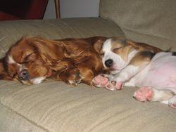 Bella ja Roosa