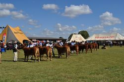 Kingaroy Limousin Feature Show 2010