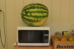 Water melon grown at the block