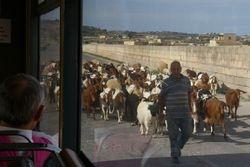 Traffic jam, Malta style
