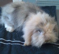 Teddy Widder konijntje voor.