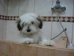 Boomer pup Rex.