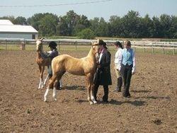2012 Knox County 4-H Foal Class